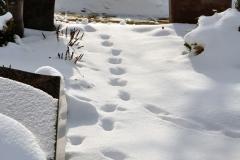 Hausen_Friedhof_Schnee_150210_56_WEB