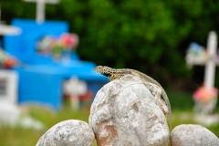 Galapagos_Isabela_0467_WEB