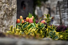 Friedhof_Istein_BaWue_090319_101_WEB