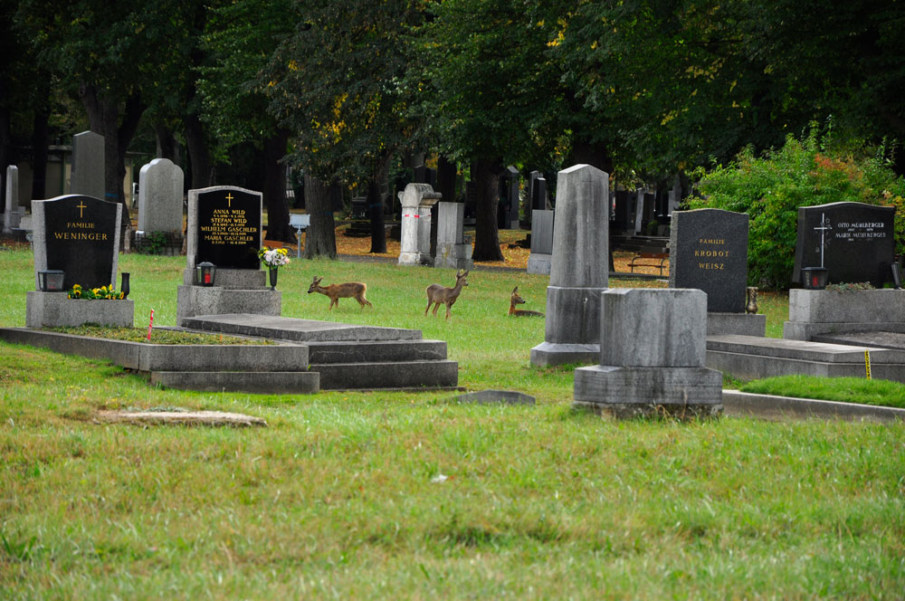 Zentralfriedhof_WIEN_10-2016_0244