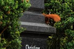 Friedhof_HN_BA-WUE_230417_102_WEb