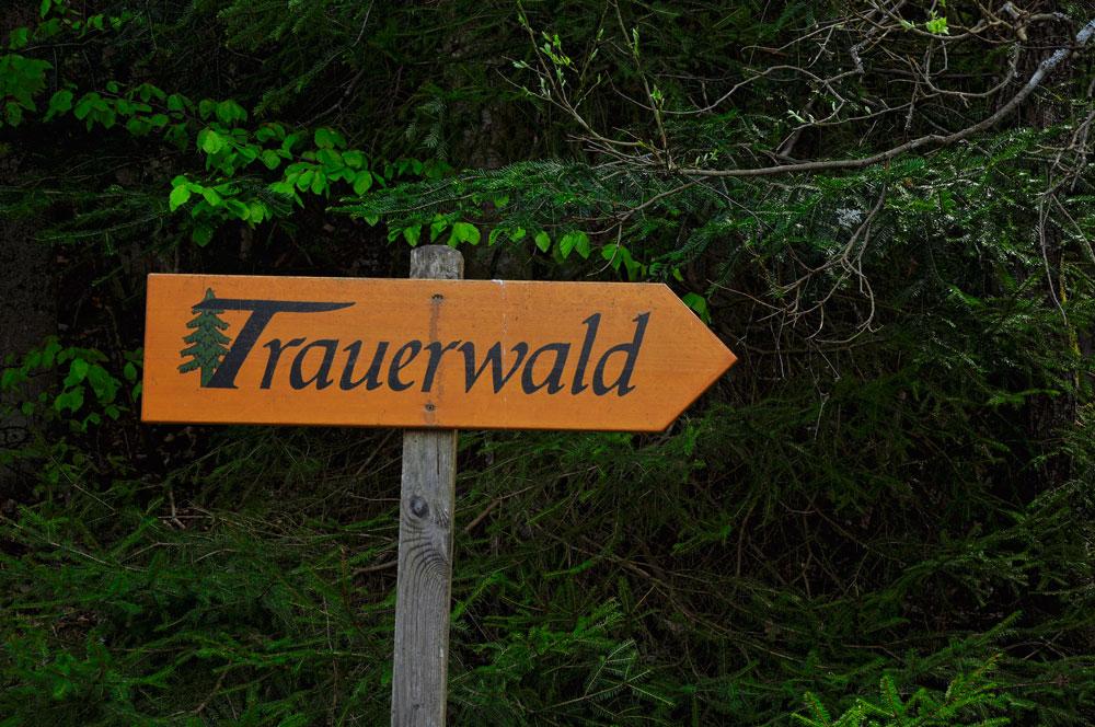 Trauerwald_BayWald_080516_002_WEB