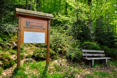 Trauerwald_BayWald_080516_003_WEB