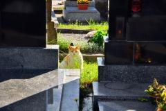 Friedhof_Susice_TSCHECHIEN_080516_076