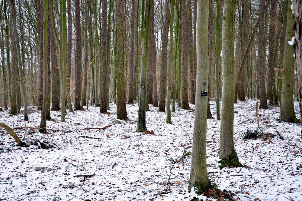 Friedwald Schwaigern