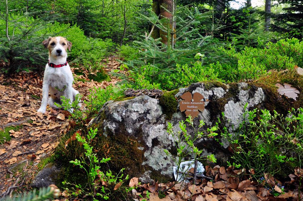 Trauerwald Bayerischer Wald, Hund, Bayerisch Eisenstein