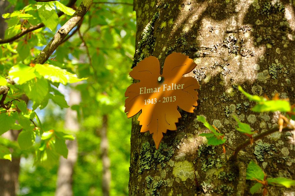 Trauerwald im Nationalpark