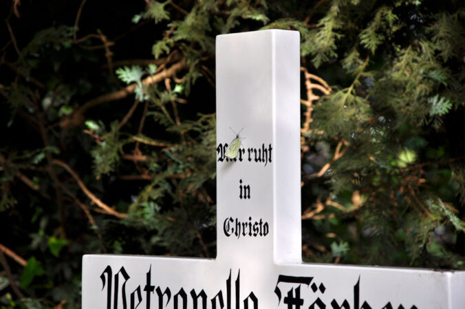 Schmetterling, Friedhof Heinsberg