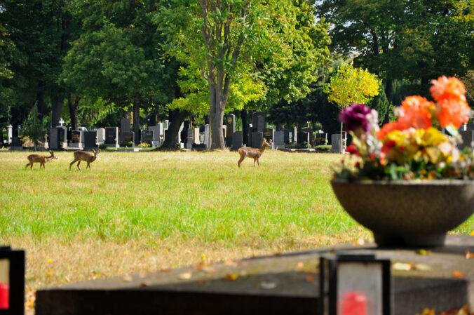 Rehe Zentralfriedhof Wien