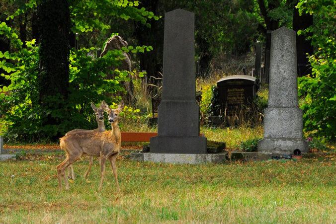 Rehe, Zentralfriedhof Wien