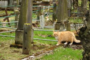 Katze auf dem Friedhof in Islands Hauptstadt Reykjavík