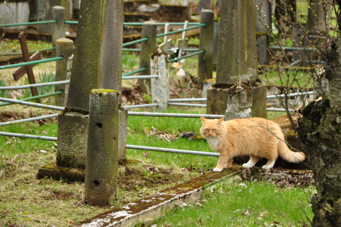 Katze Friedhof Reykjavík